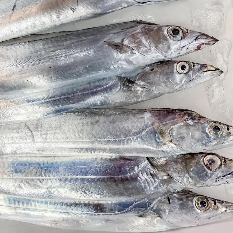 (網)太刀魚